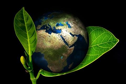 ecology-ecologia-pixabay